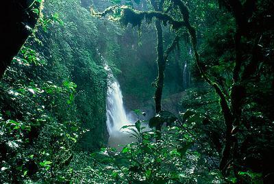 selva-amazonica1